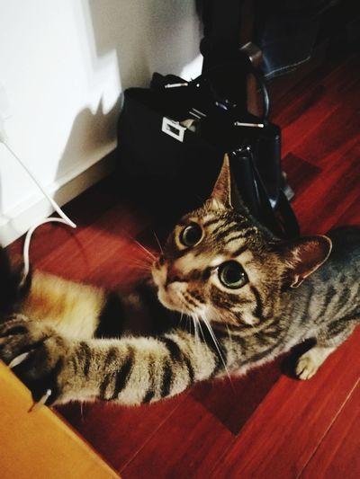 Cats Feline Pets