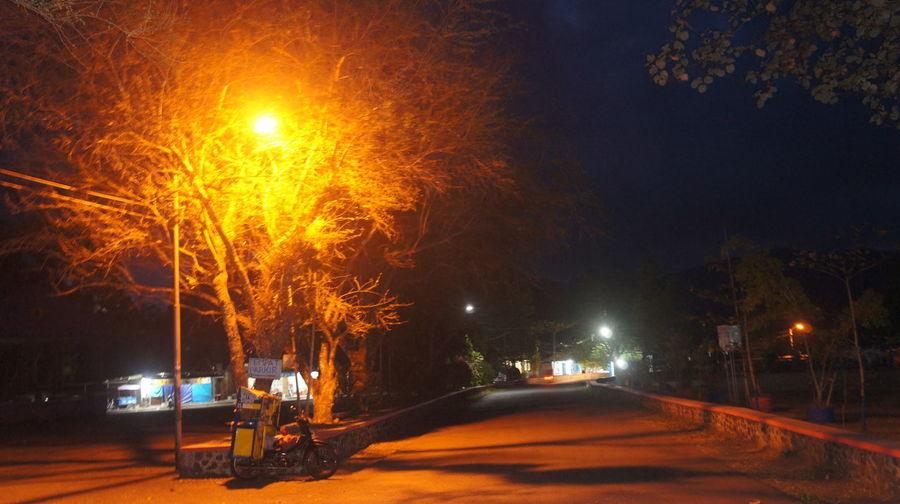Street light at night Cold Temperature Motion Night No People Road Street Street Light Tree