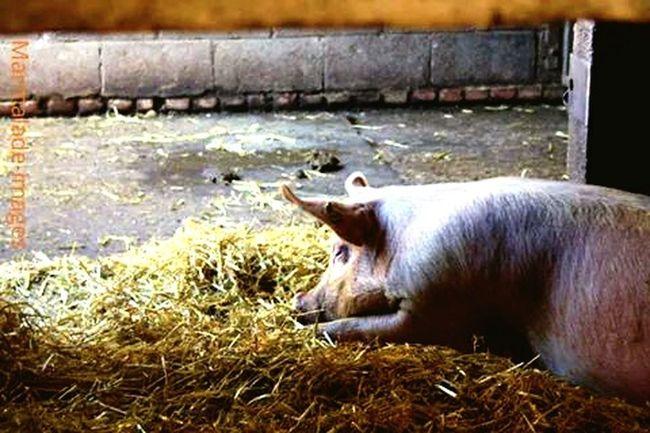 Taken by Emma. Lazy days on the farm.