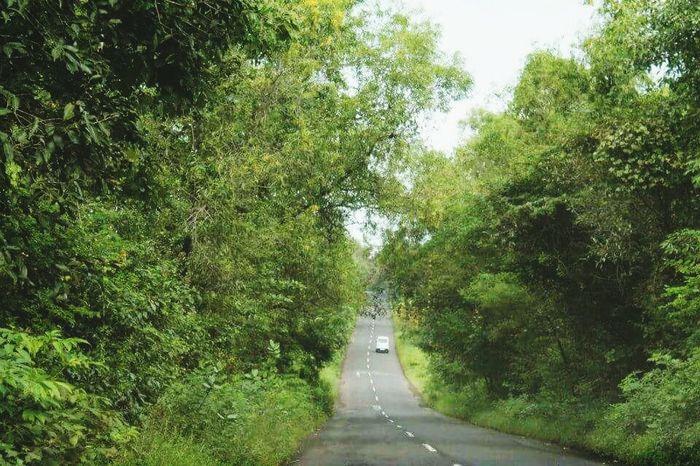 Roadtrip Roads Green Road