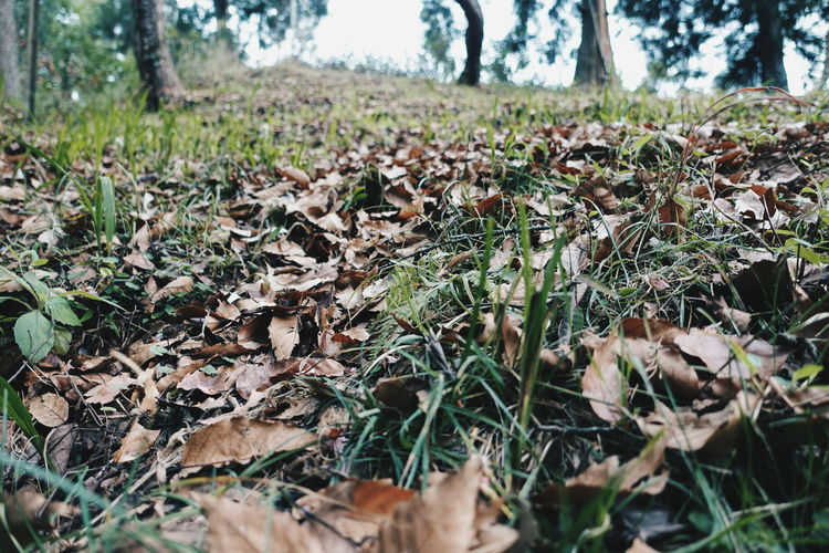 Sony Rx100 M3 Sony Rx100 Iii Grass Grass And Leaves Winter Winter Leaves Nature Photography Nature_ Collection  Nature_collection Nature Macro Nature Macro Beauty VSCO VSCO Cam Vscocam Vscodaily Defocused Background Nature Shillong DaryllSwer