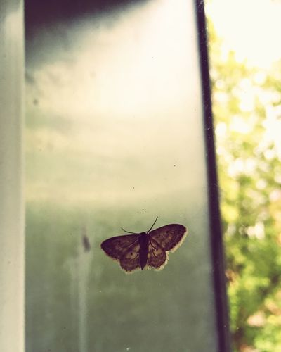 EyeEm Nature Lover Getting Creative Butterfly Capture The Moment Enjoying Life Eye4photography  Urban Nature The Moment - 2015 EyeEm Awards Deceptively Simple in Köln Nature's Diversities The Essence Of Summer Adapted To The City Live For The Story Sommergefühle