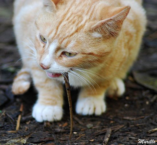 Cataluña Barcelona, Spain Catalunya Martorell NikonD60 Animal Photography Nikonphotography Nikonespaña Cat Cats Cat Lovers Cat♡ Cats 🐱 Gat Gato Gatos 😍 Gato😽 Feline Felines Felino Felinos Felino !!! Mammal Nature Animal Themes