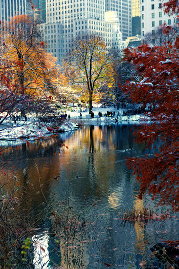 Snow and fall colors in Central Park, NY Autumn Colors Central Park Manhattan New York Winter Architecture Autumn Beauty In Nature City Foliage Lake Landscape Nature Outdoors Reflection Scenics Snow Tree Water Waterfront