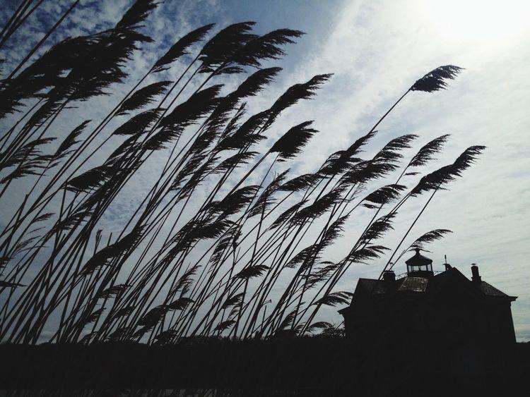 Shine on Lighthouse Hudson River Sunny Day