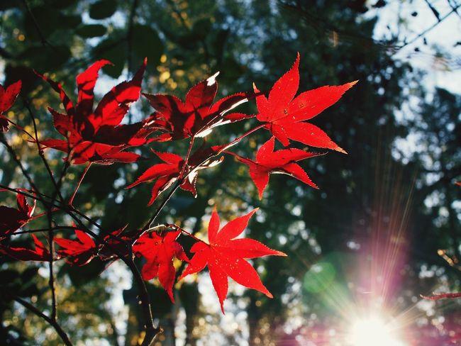 Autumn leaves. Autumn Colors