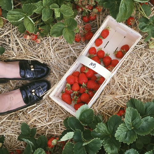 Shoes and Berries Strawberry いちご Adorable Cute Fashion Loafers Human Leg High Angle View Food And Drink Red Real People Food Low Section Day Healthy Eating Freshness Leaf One Person Outdoors Fruit Plant Women Nature People