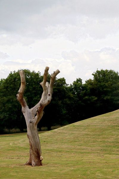 Lonely Rotting Tree! Landscape Landscape_Collection Landscape_photography Photo Photography Nature Nature_collection Nature Photography Naturelovers Nature On Your Doorstep Tree Trees Tree_collection  Treescape Rotting Wood