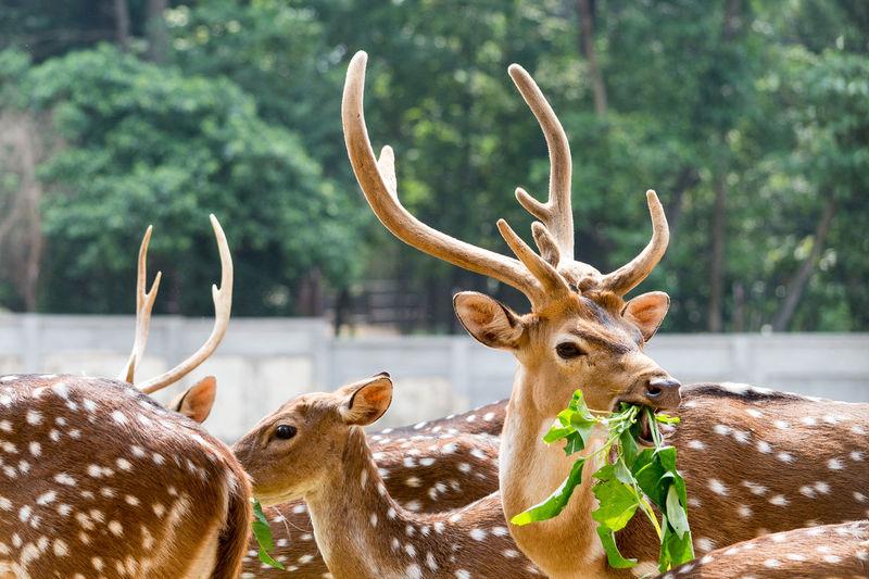 Deer Eating Plant Against Trees