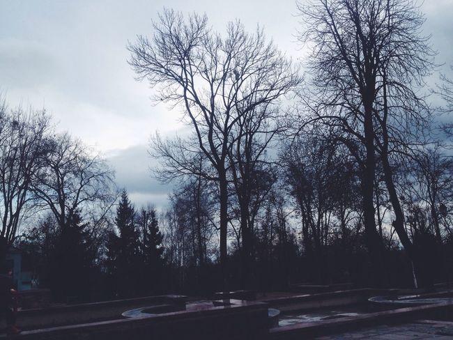 Ukraine Park Darkness Autumn Trees Sky Nature Naturelovers