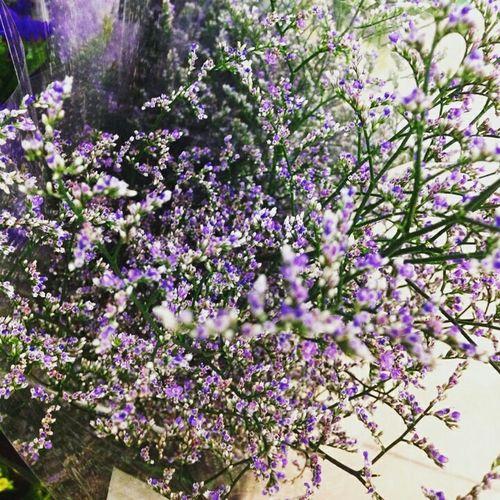 Purple Flower Dalathasfarm Flowers Sad MissDad
