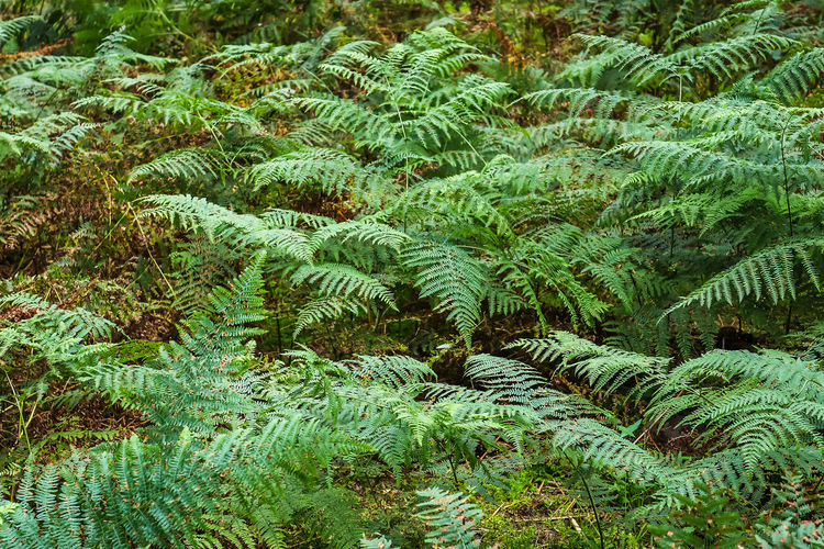 High angle view of fern tree