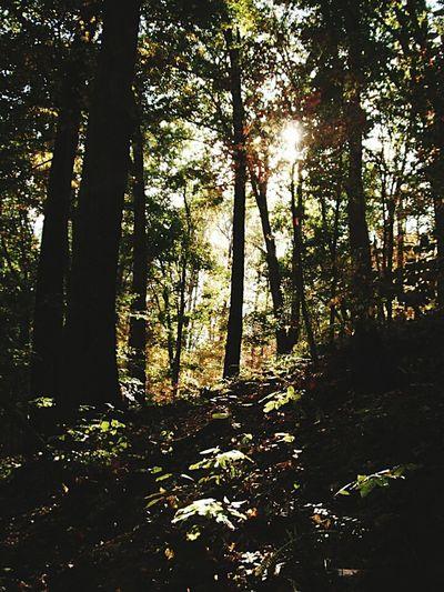Hikingadventures The Traveler - 2015 EyeEm Awards Country Girl Scenery Thegreatoutdoors2015EyeemAwards Wanderlust Travel Forest The Adventure Handbook Holiday POV EyeEmNewHere