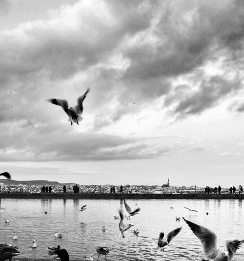 Blackandwhite Monochrome Landscape_bw EyeEm Best Shots