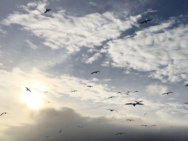 Showcase: February birds