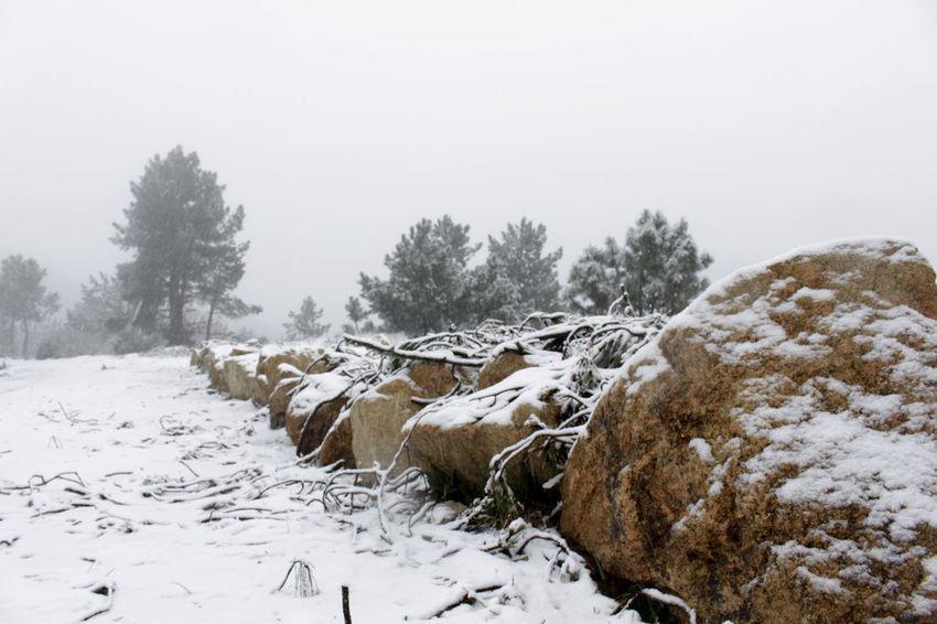 Uma paisagem branca    White landscape - February 2016    Citybycity Eye Em Around The World Snow Winter White Sabugueiro Serradaestrela Portugal The KIOMI Collection