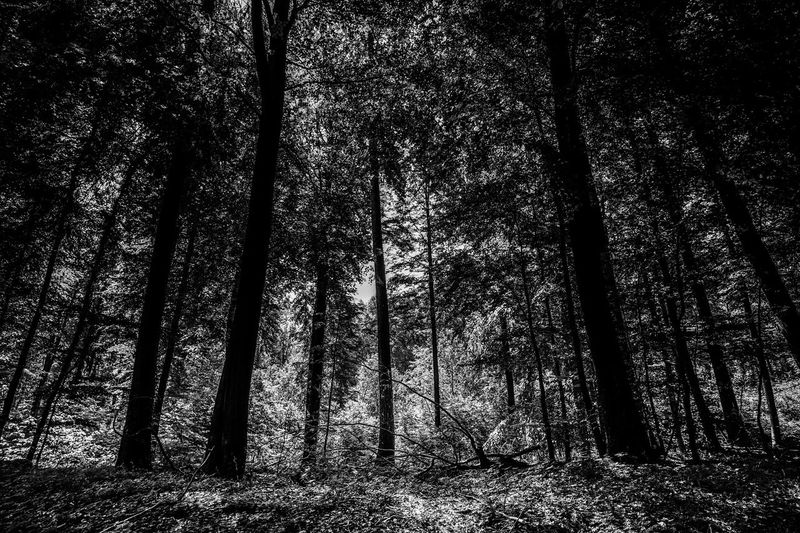 Black & White EyeEm Nature Lover Alone In The Woods Beauty In Nature Black And White Blackandwhite Forest Growth Landscape Nature Plant Scenics - Nature Tranquil Scene Tranquility Tree Tree Trunk Trunk Wilderness WoodLand