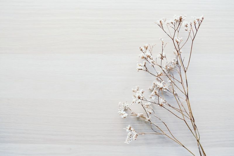 Twig of dried flowers. Top view. Free space for you text Herbarium Design Decoration Background Flower Flowers Flower Head Top View Space For Text White Background Minimalism Top Dry Flower  Rustic Water Lake Nature Outdoors No People Beauty In Nature Day