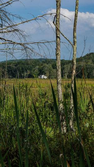 Catskill Mountains Catskill, New York USA Landscape_Collection New York Catskillmountains Landscape Landscapes Mountain