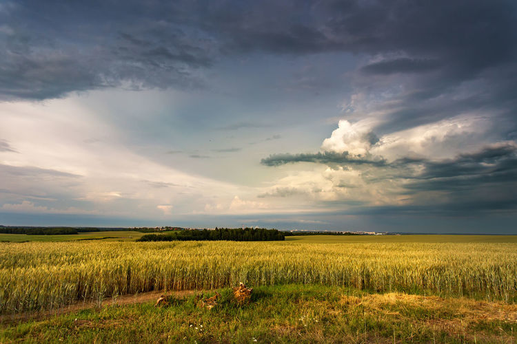 Storm dark clouds over field. Thunderstorm over a wheat field. Rural scene in Belarus, Europe Storm Summer Clouds Sky Field Rain Landscape Dark Thunderstorm Nature Cloud Weather Wheat Dramatic Stormy Scene Scenic View Rural Over Cloudscape Beautiful Horizon Panorama Thunder Disaster Grass Agriculture Yellow Natural Danger Land Meadow Cereal Blue Fields Panoramic Evening Sunset Belarus Europe June July August Outdoors Rural Scene Cloud - Sky Tranquility Beauty In Nature Scenics - Nature