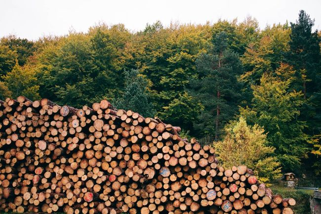 Beautifully Organized Stack Log Abundance Timber Tree Large Group Of Objects Woodpile Lumber Industry Deforestation Heap Outdoors No People Sky Nature Day Forestry Industry