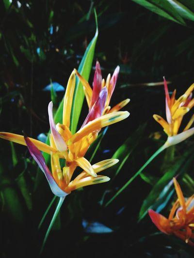 flower on night