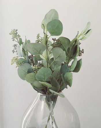 Leaf Flower Growth Plant Nature Vase No People