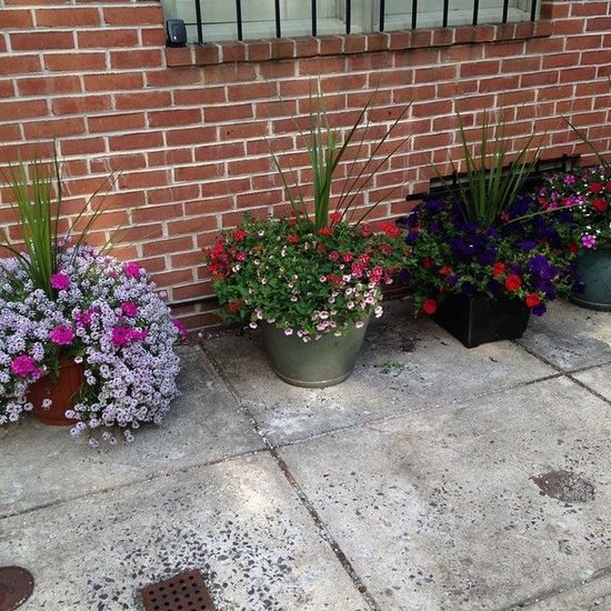 I love the sidewalk gardens in South Philly ABeautifulMorning ATouristInMyOwnCity ScenesFromTheStreet TheSidewalksOfTheCity MemorialDayWeekend2015 Southphilly Beautiful Flowers LaDolceVita