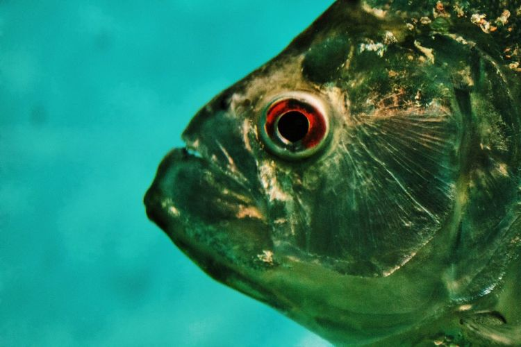 Close-up portrait of turtle in water