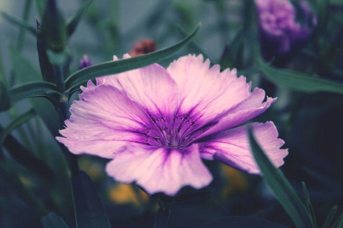 Flower Flower Collection EyeEm Nature Lover Nature