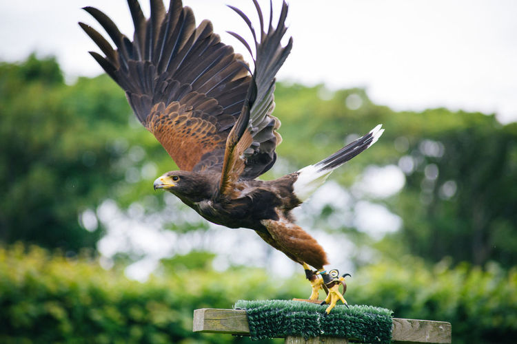Close-up of eagle flying against tree