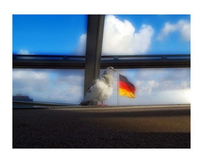 Amemania GERMANY🇩🇪DEUTSCHERLAND@ Paloma Bandera De Alemania Dove Reichstag