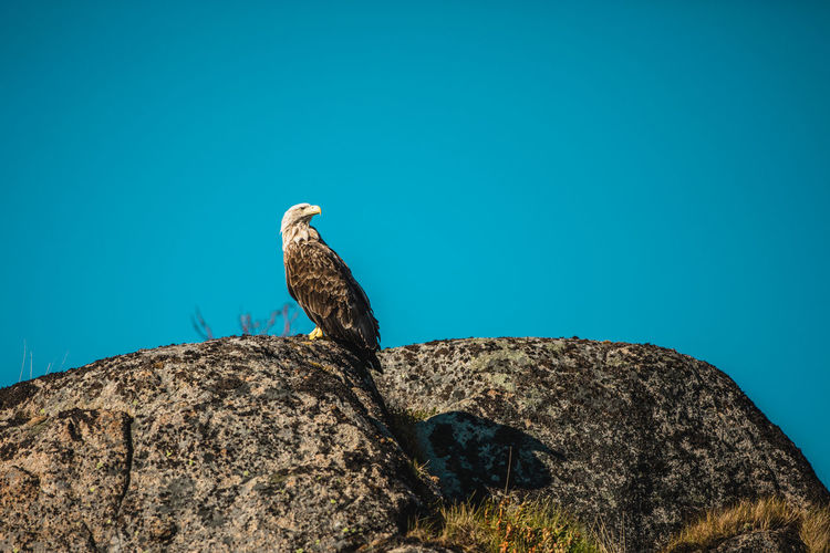 Low angle view of eagle perching on rock