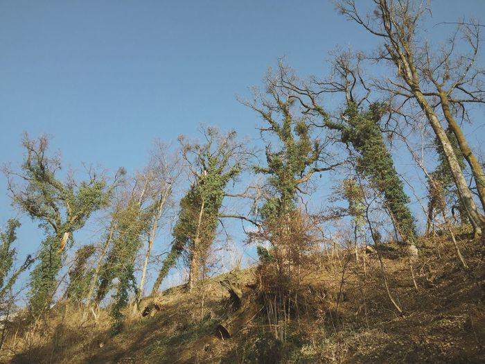Giants Dubravkinput Zagreb Trees Giants Nature Landscape