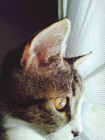 Gato Cat First Eyeem Photo Pretty