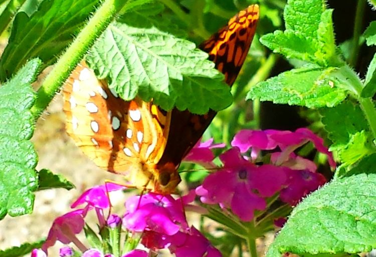 43 Golden Moments Butterfly Wildlife Photography Butterfly Photography Close Up Sunlight And Shadow Potted Plant Break From Work 43 Golden Moments