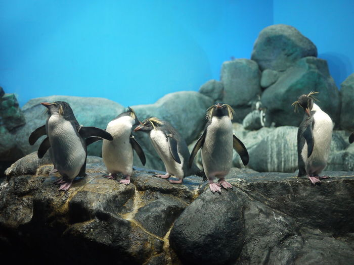 Penguins on top of rock at zoo
