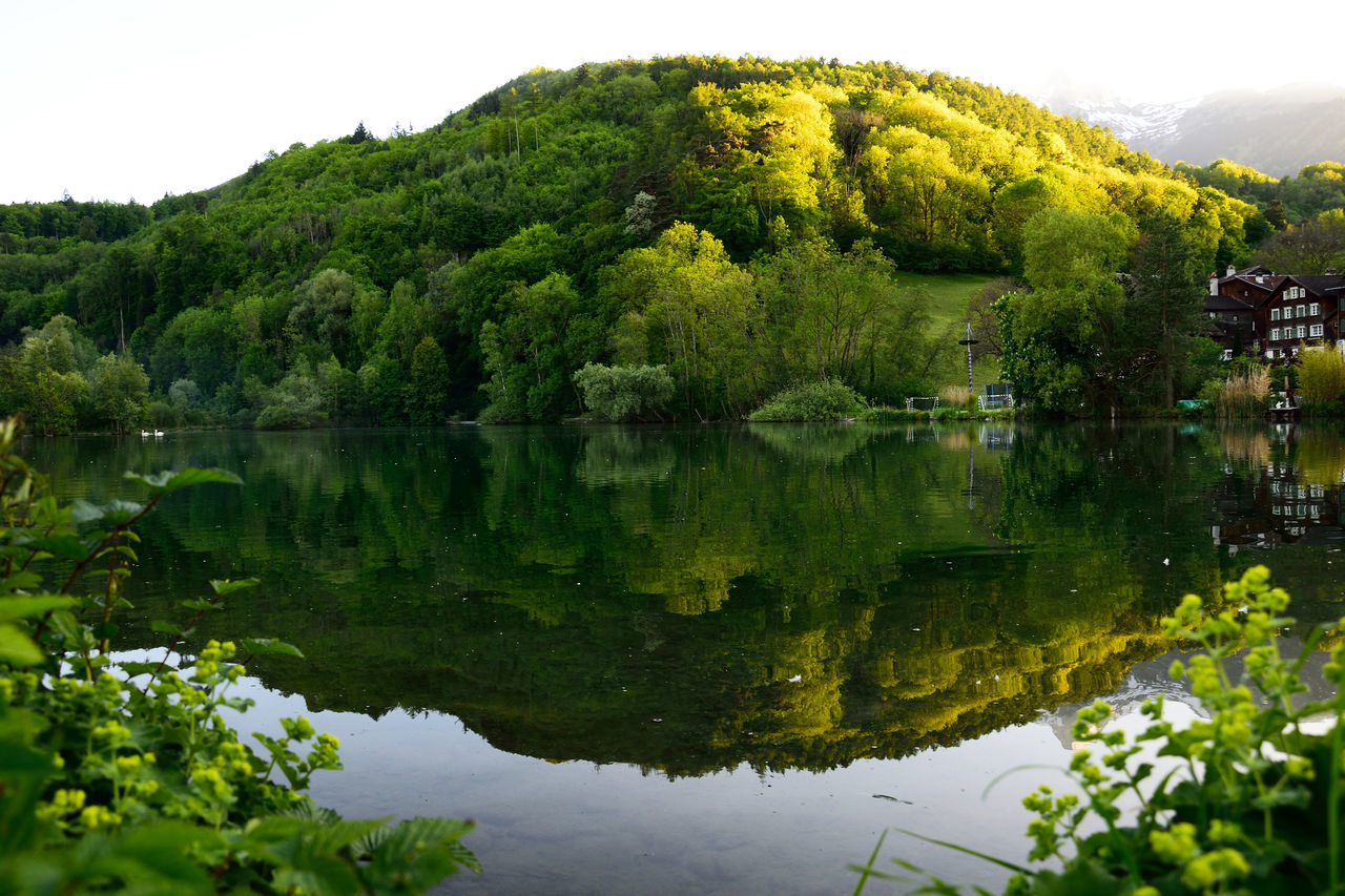 reflection, tree, lake, water, nature, green color, growth, beauty in nature, tranquil scene, tranquility, no people, outdoors, day, waterfront, plant, scenics, mountain, sky