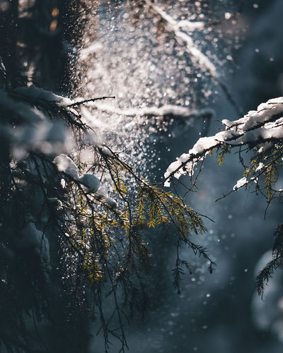 Plants and trees during winter
