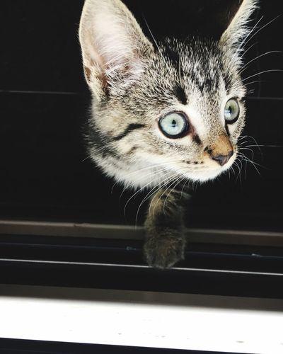 I'm watching you Cat Animal Themes Domestic Cat One Animal Animal Pets Feline
