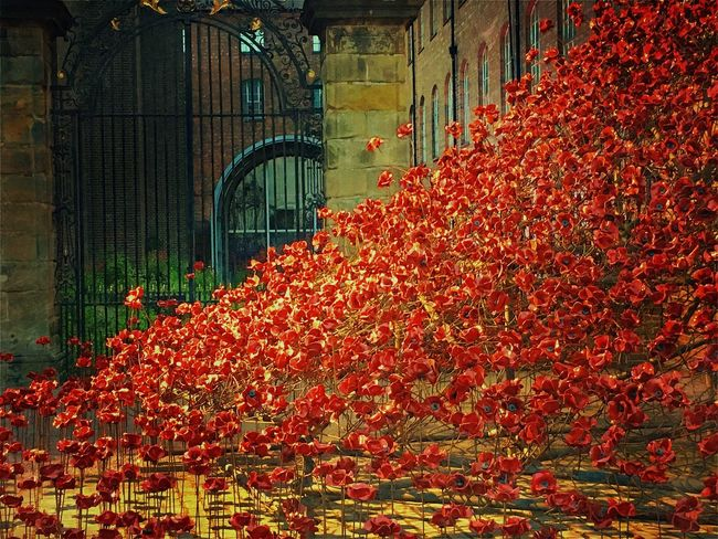 Derby Arts Culture And Entertainment Derby City Derby Silk Mill. Poppies  Poppies In Derby Red