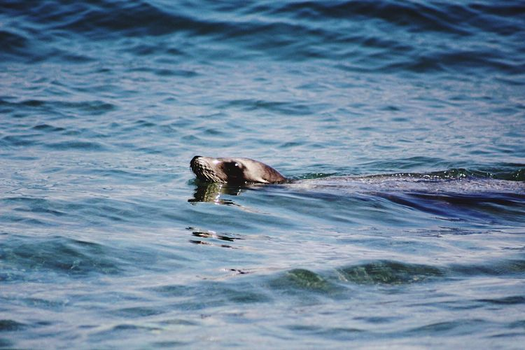 Water Waterfront Animals In The Wild Sea Animal Wildlife Nature Outdoors EyeEm Best Shots