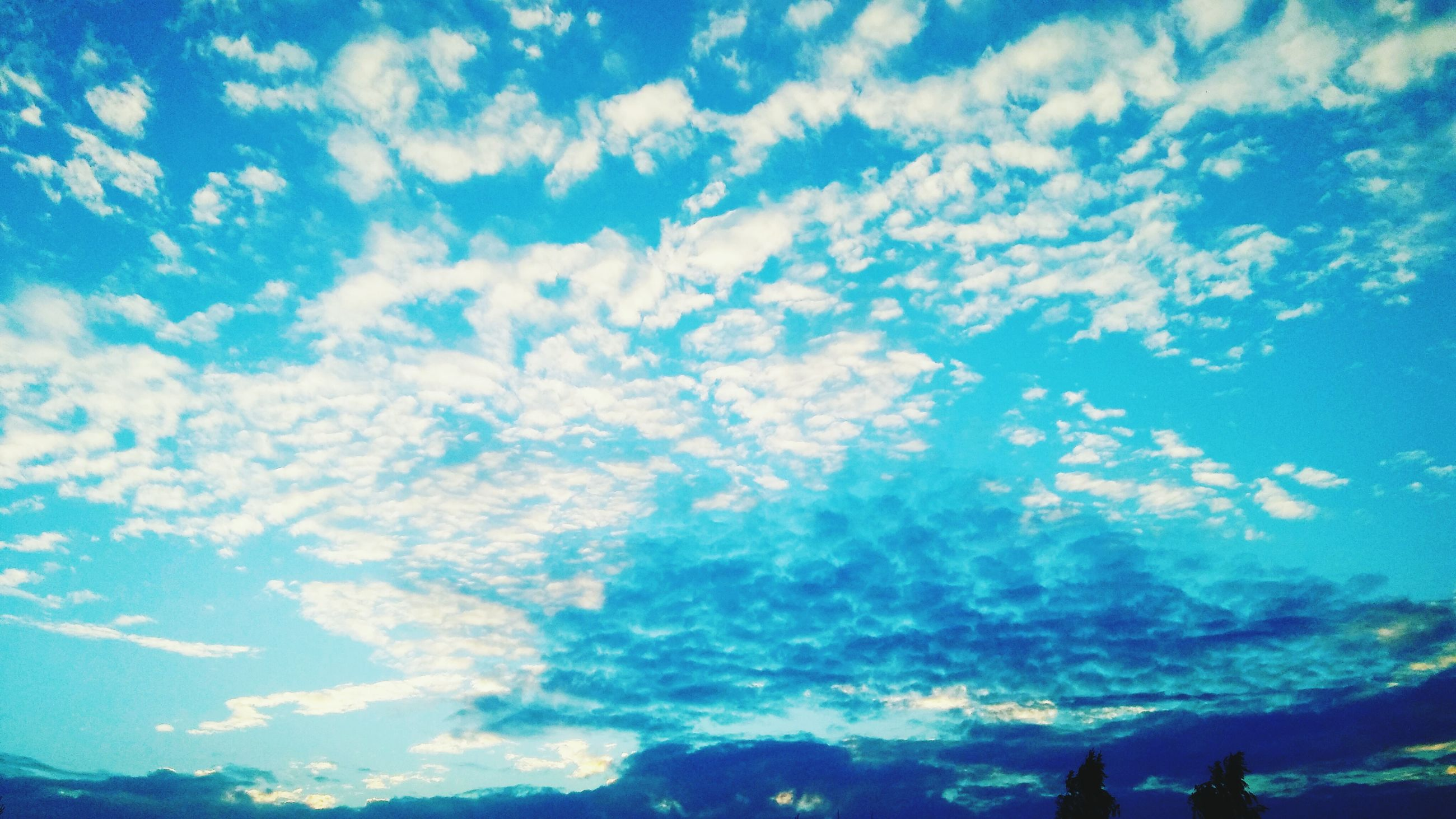 scenics, sky, beauty in nature, tranquility, blue, tranquil scene, low angle view, silhouette, cloud - sky, nature, idyllic, cloud, majestic, cloudscape, day, outdoors, non-urban scene, treetop, dramatic sky, outline, remote, atmosphere, high section, cloudy, no people, meteorology, atmospheric mood