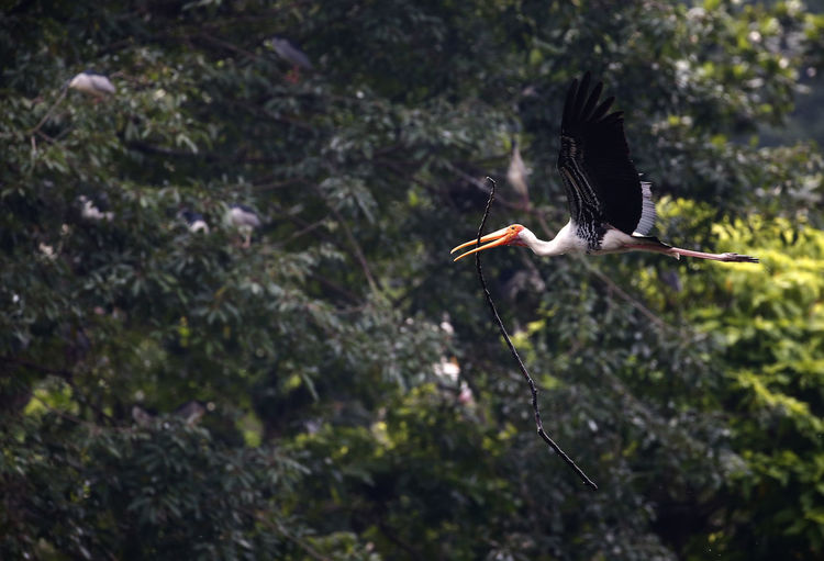 Close-up of bird flying in forest