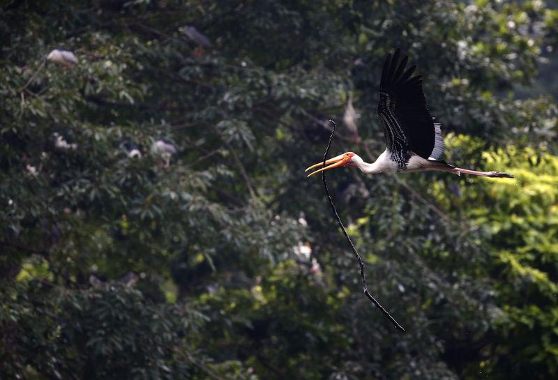Bird Photography Nature Animal Bird Flying Outdoor Photography Outdoors Wildlife