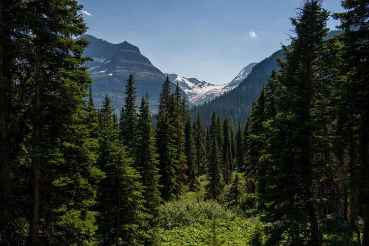 Jackson glacier - glacier national park