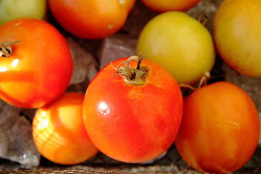 Close-up Day Food Food And Drink Freshness Fruit Group Of Objects Healthy Eating High Angle View Indoors  Large Group Of Objects No People Orange Color Raw Food Red Ripe Still Life Tomaten Tomato Tomoto Vegetable Wellbeing