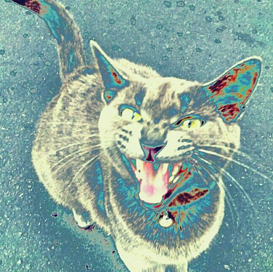 Kitty Cat Kittylove Kittycat Kitty Looking Down Lookingdown Cat♡ Cat Catlove Hisstag Hiss Hissing Kitty Love Mad-dogging Maddogin Blacktop Fangs Saturatedcolor Saturated Saturatedcolors Saturation