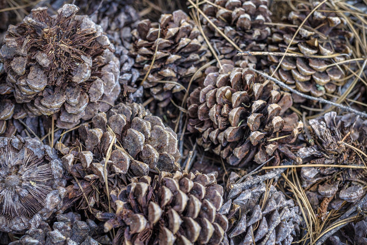 Full frame shot of pine cones
