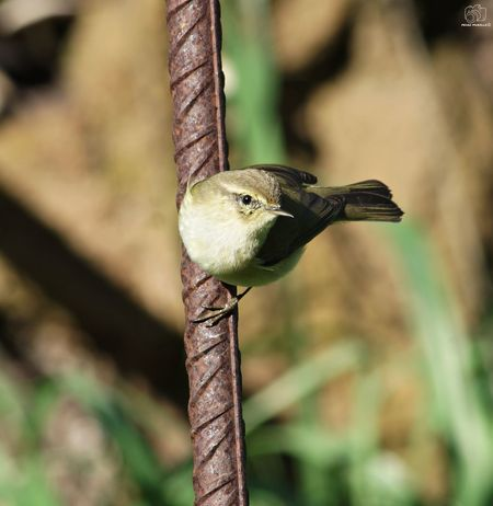 Birds Animal Animals Nature Looking At Camera Bird Photography Perching Tree Bird Branch Insect Animal Themes Close-up Snake Chameleon Lizard Reptile Tail Iguana Grasshopper Confined Space Grasshopper Animal Eye Gecko